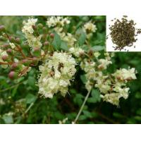 Wholesale Lawsonia Inermis Extract from china suppliers