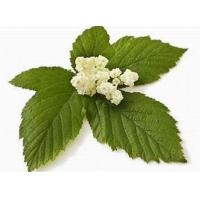 Wholesale Spiraea Ulmaria Extract, Drop wort extract, Meadowsweet Extract from china suppliers