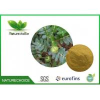 Buy cheap Traditional Chinese Herb Tribulus Terrestris Extract from wholesalers